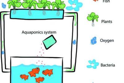 Aquaponics Kits