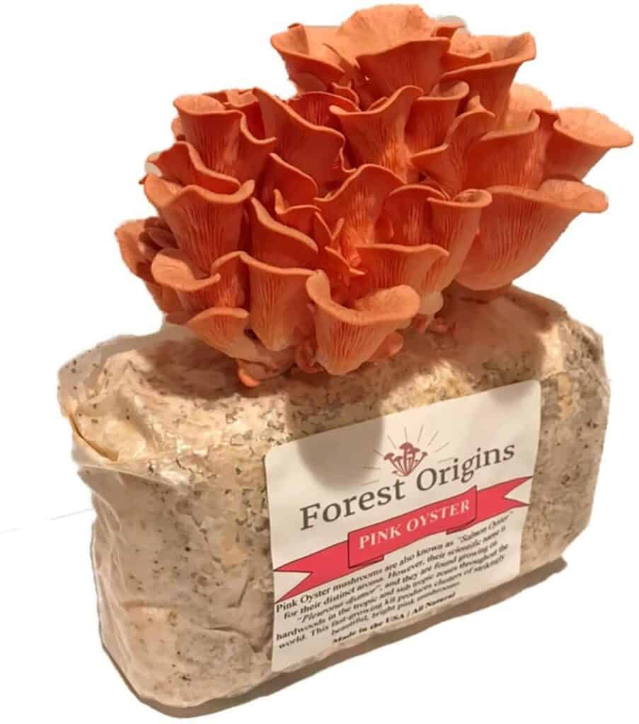 Forest Origins Pink Oyster Mushroom Kit