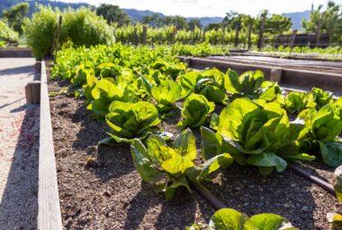 Vegetable Garden Layouts