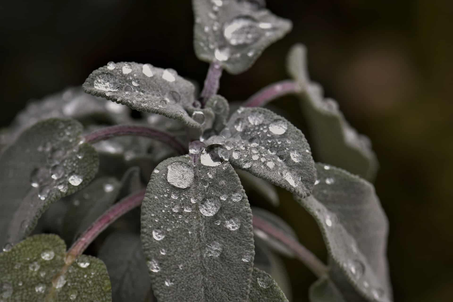 Raindrops on plant leaves
